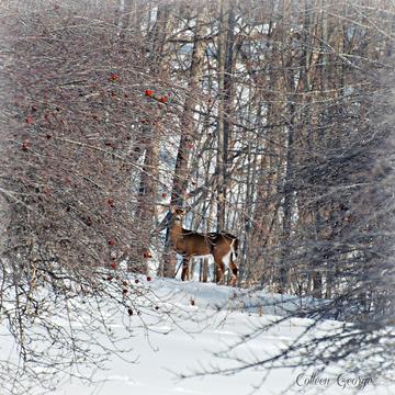 Shy Winter Beauty