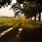 RAIN STORM....