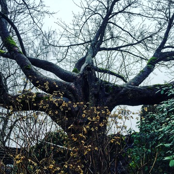 THE SELFISH TREE?