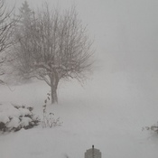 Fort Erie White Out conditions