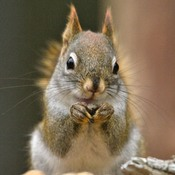 A Nattering Nut Eater