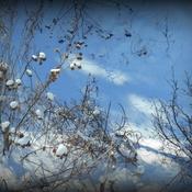 Ciel bleu et les ombres