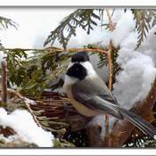 Trop froid pour le nid la .. la ...