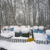 Beehives During Winter at Meadowlily Farm