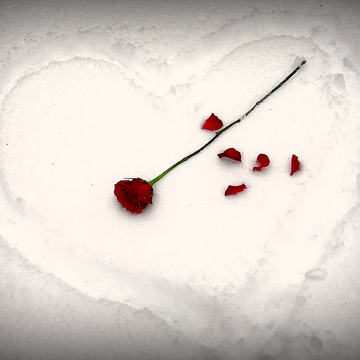 Snowy Heart and Rose