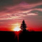 Valentines Pink Sunrise Saskatchewan