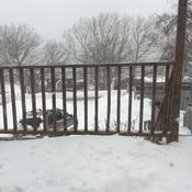 Snowe day