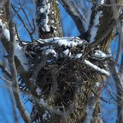 GHO Nest