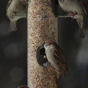 A day at the feeder.