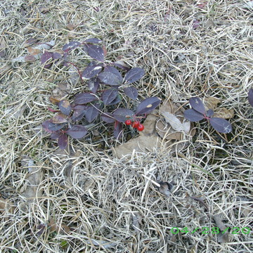 Early Spring Berries