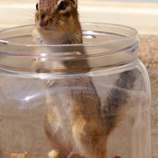 Caught In The Peanut Jar