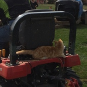 When we're done here, can we take the tractor to my litter box?