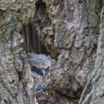A peek into the nest