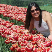 Lovely colors at Abbotsford Tulip Festival