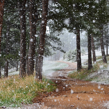 Spring Snow in Colorado