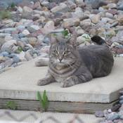 The cat is Relaxing on a Stepping stone