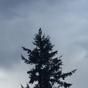 Eagle In A Tree Under Clouds