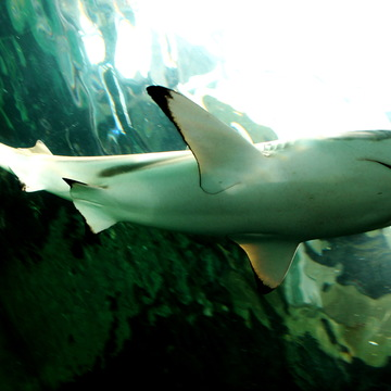 Close to Shark
