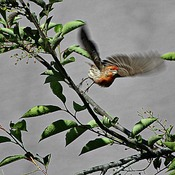 Blessed by the sounds of music today. Baltimore Orioles, Heron, Finches and many