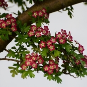 Any Know Tree Name...