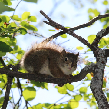 Very greedy squirrel at Seba Beach