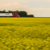 Cruising Past Some Canola