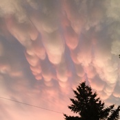 Sunset Mammatus Clouds