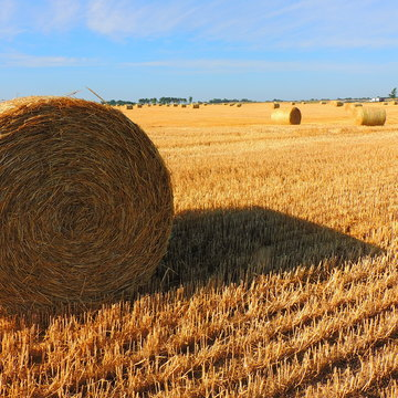 Make hay while the sun shines.....
