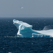 Iceberg In Summer