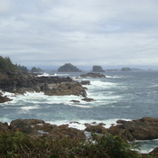 Pacific Rim Trail in Ucluelet BC
