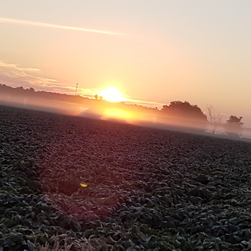 Sunrise in the fog