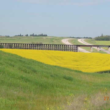 Canola and a trestle bridge