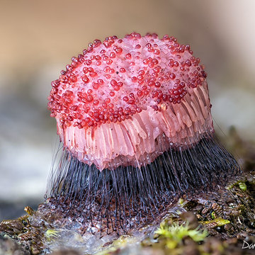 Cute little slime mold