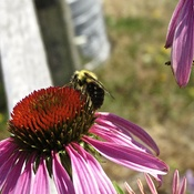 Our pollinators hard at work...