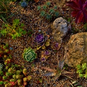 A most beautiful little Rock Garden