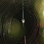 Beautiful Spider Web.