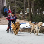 Mushing in Nova Scotia
