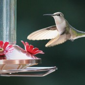 Summer Hummers