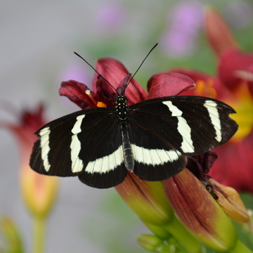 Beautiful butterfly in the summer