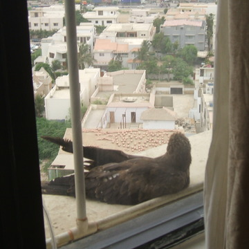 Bird Spotting in Karachi