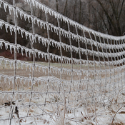 Ice Storm Day One - Fence