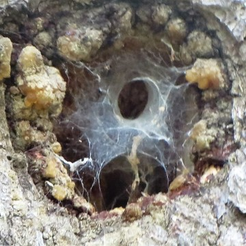 Some weird spider crap going on...