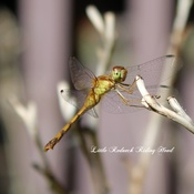 Happy Dragonfly!