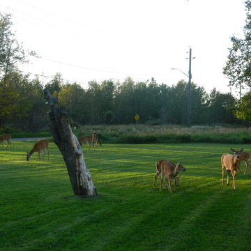 a warm evening to graze