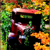"""COLRED LEAVES & MODEL T's"""