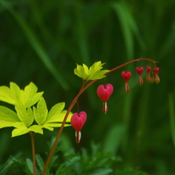 """MY BLEEDING HEARTS"""
