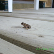 Baby Toad Comes to Visit