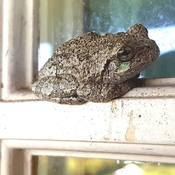 Little toad on the window