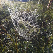Amazing spider web