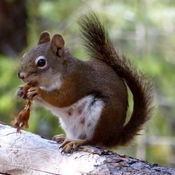 SNACKING SQUIRREL SPOTTED!